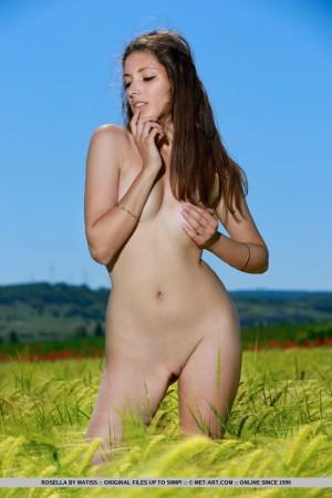 Rosella 6213