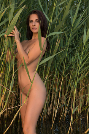 Jasmine 9392